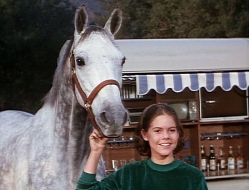 the-horse-in-the-gray-flannel-suit-1968